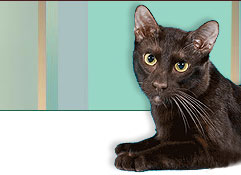 how to get rid of giardia in cats